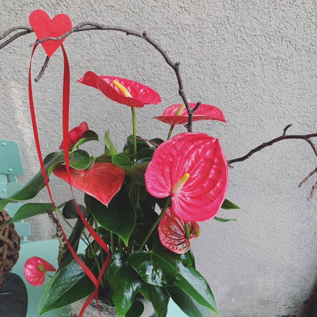 Anthurium décoré 53.-